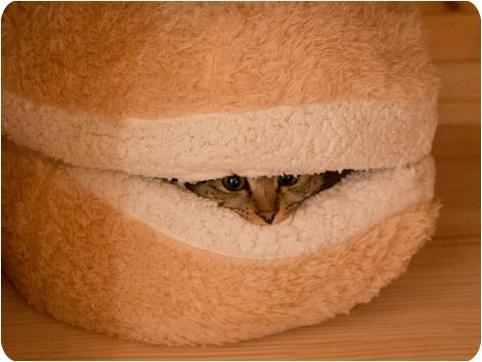 تصاویر خانه بامزه این گربه