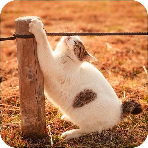 عکس های جالب زندگی گربه ها