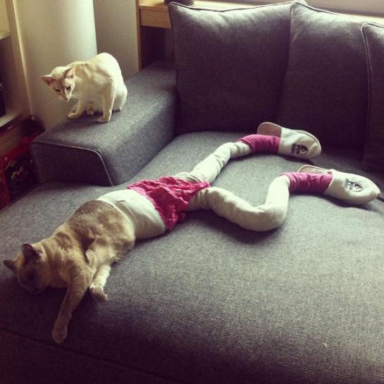 عکس گربه ها با جوراب شلواری