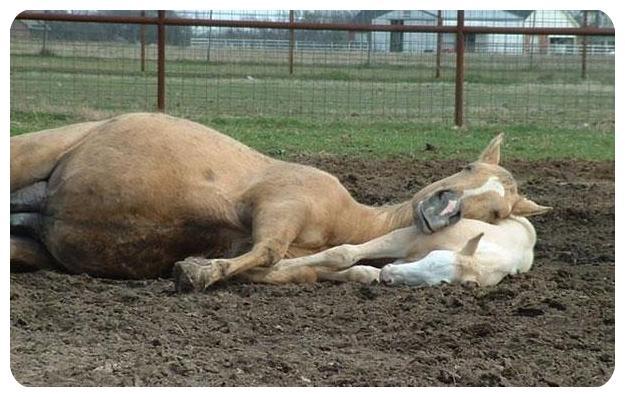 عکس های بامزه خوابیدن حیوانات روی هم