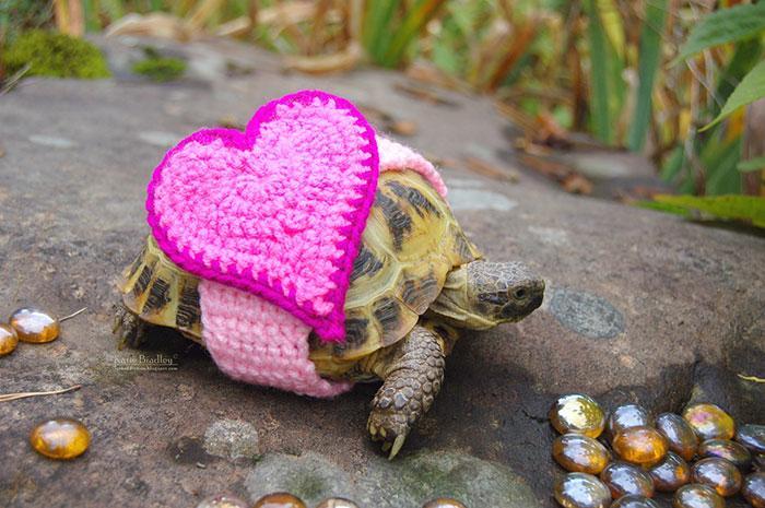 www.rahafun.com-cute-crochet-tortoise-cozy-katie-bradley (10)
