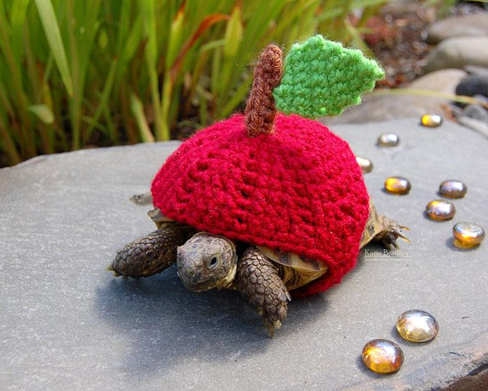 www.rahafun.com-cute-crochet-tortoise-cozy-katie-bradley (11)