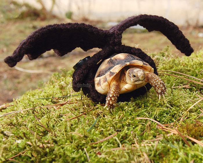 www.rahafun.com-cute-crochet-tortoise-cozy-katie-bradley (12)