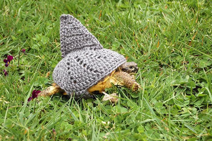 www.rahafun.com-cute-crochet-tortoise-cozy-katie-bradley (13)