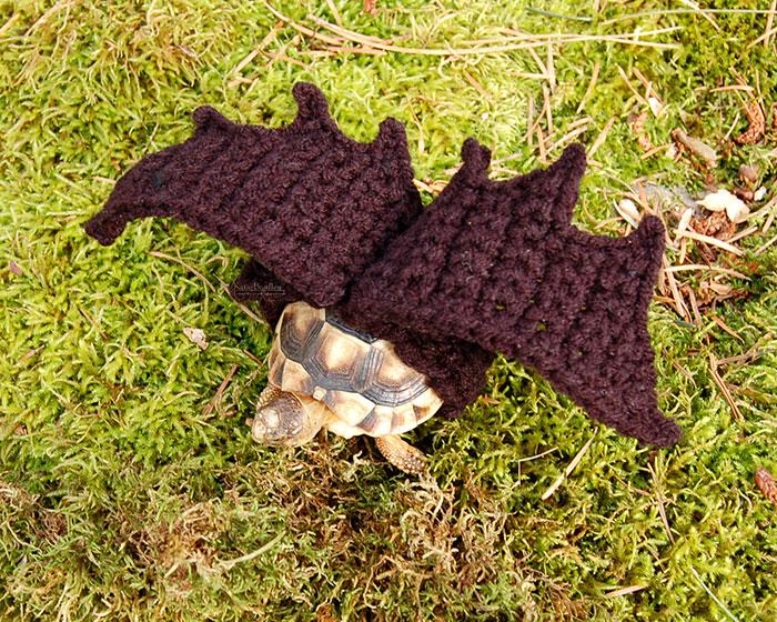 www.rahafun.com-cute-crochet-tortoise-cozy-katie-bradley (16)