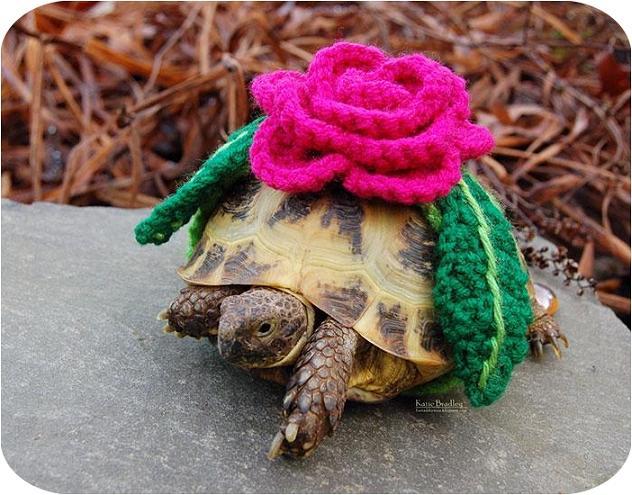 www.rahafun.com-cute-crochet-tortoise-cozy-katie-bradley (2)