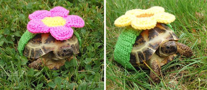 www.rahafun.com-cute-crochet-tortoise-cozy-katie-bradley (3)