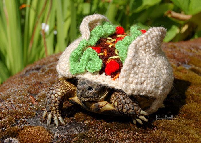 www.rahafun.com-cute-crochet-tortoise-cozy-katie-bradley (4)