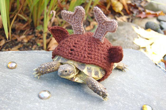 www.rahafun.com-cute-crochet-tortoise-cozy-katie-bradley (6)
