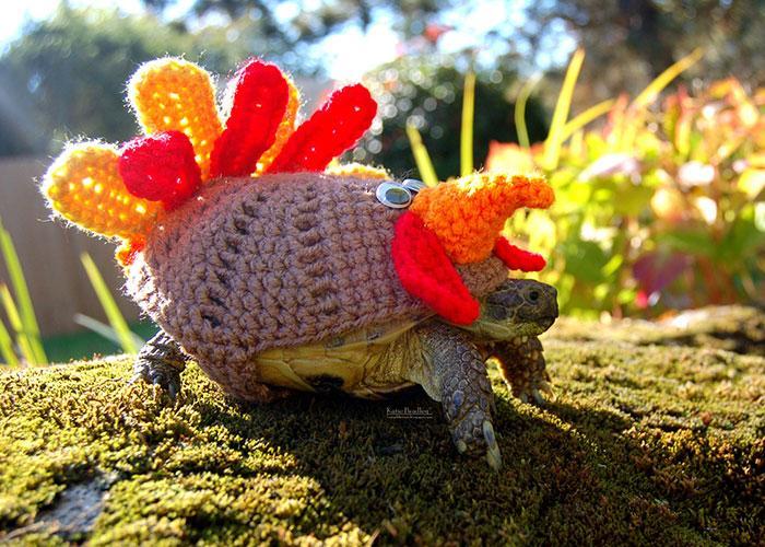 www.rahafun.com-cute-crochet-tortoise-cozy-katie-bradley (7)