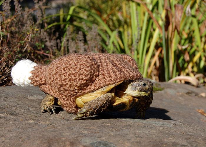 www.rahafun.com-cute-crochet-tortoise-cozy-katie-bradley (8)