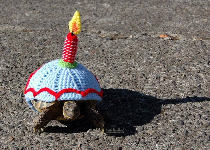 www.rahafun.com-cute-crochet-tortoise-cozy-katie-bradley (9)