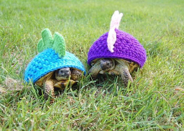 www.rahafun.com-cute-crochet-tortoise-cozy-katie-bradley