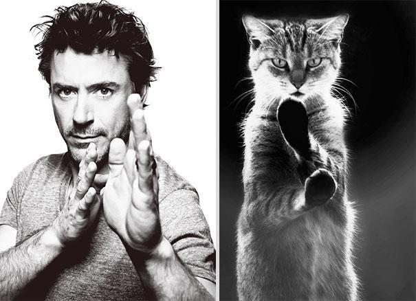 تشابه پسر و گربه