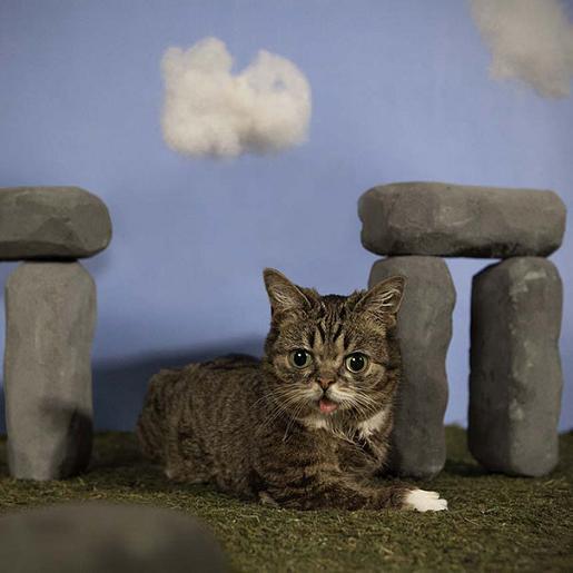 عکس گربه خوشگل و ناز