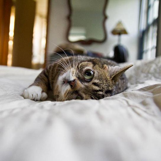 www.rahafun.com dwarf kitten lil bub cat 14 به این میگن یه گربه خوشرو و خوش اخلاق