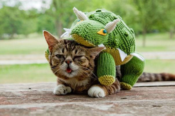 www.rahafun.com dwarf kitten lil bub cat 17 به این میگن یه گربه خوشرو و خوش اخلاق