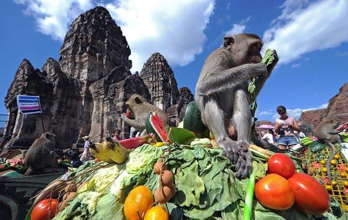فستیوال بزرگداشت میمون ها در تایلند