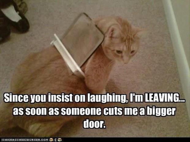گلچین عکس خنده دار حیوانات