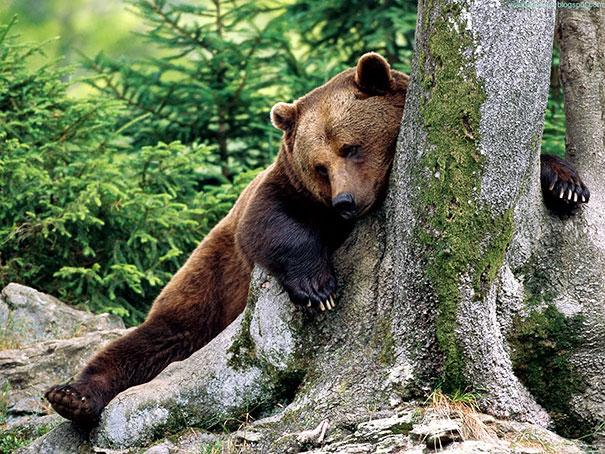 عکس خنده دار خرس ها