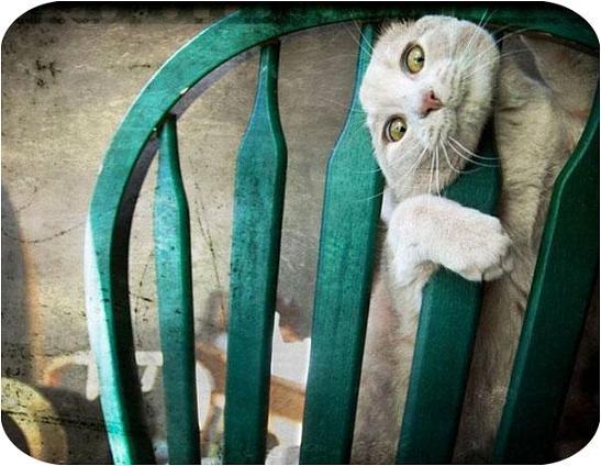 عکس کارهای عجیب و غریب حیوانات