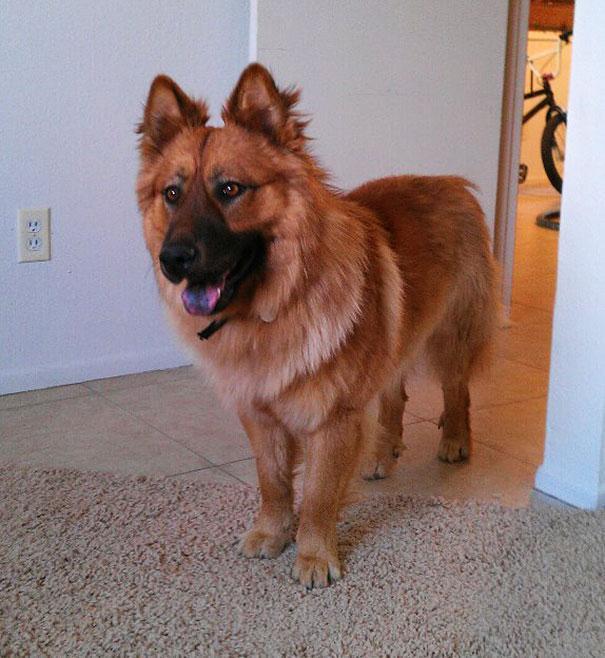 www.rahafun.com funny dogs mixed breeds 65 11 عکسهای نژاد مختلف سگ