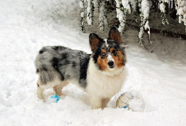 www.rahafun.com funny dogs mixed breeds 65 15 عکسهای نژاد مختلف سگ