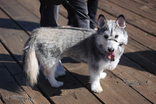 www.rahafun.com funny dogs mixed breeds 65 16 عکسهای نژاد مختلف سگ