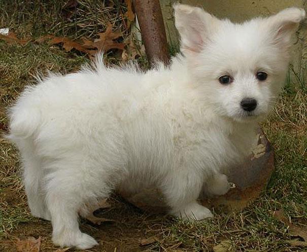 www.rahafun.com funny dogs mixed breeds 65 19 عکسهای نژاد مختلف سگ