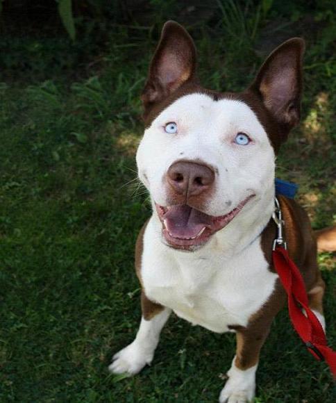 www.rahafun.com funny dogs mixed breeds 65 22 عکسهای نژاد مختلف سگ