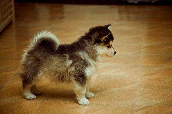 www.rahafun.com funny dogs mixed breeds 65 3 عکسهای نژاد مختلف سگ
