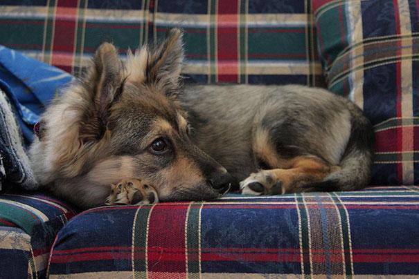 www.rahafun.com funny dogs mixed breeds 65 5 عکسهای نژاد مختلف سگ