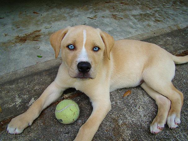 www.rahafun.com funny dogs mixed breeds 65 7 عکسهای نژاد مختلف سگ