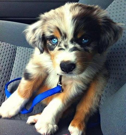 www.rahafun.com funny dogs mixed breeds 65 8 عکسهای نژاد مختلف سگ