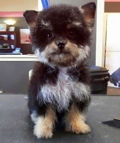www.rahafun.com funny dogs mixed breeds 65 عکسهای نژاد مختلف سگ