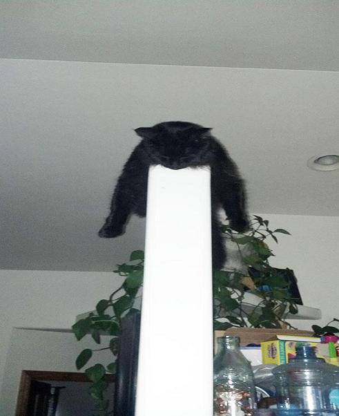 عکس گربه ها