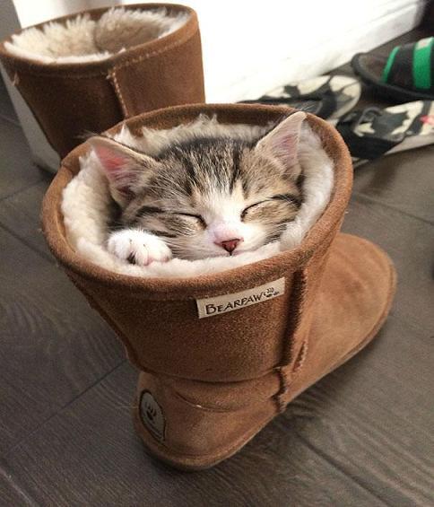 جدیدترین عکس گربه
