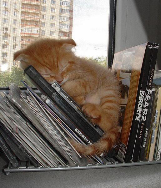عکس بچه گربه