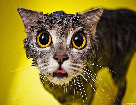عکس خنده دار گربه
