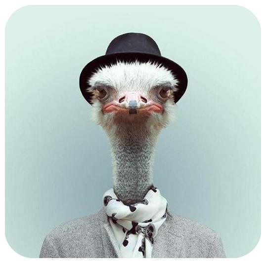 تا حالا عکس پرسنلی حیوانات رو دیدی؟ - جالب