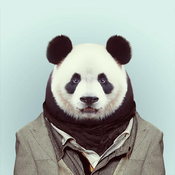 www.rahafun.com funny zoo animal portraits yago partal 3 تا حالا عکس پرسنلی حیوانات رو دیدی؟   جالب