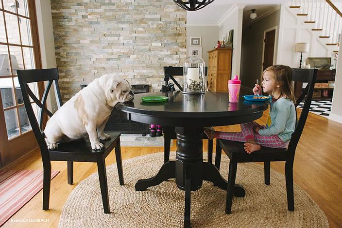 عکس سگ بزرگ