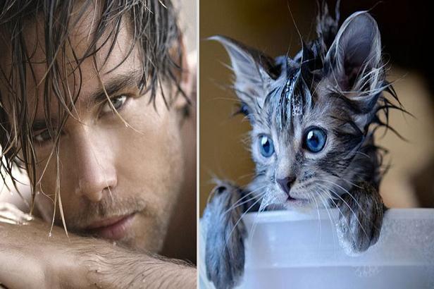عکس های جالب تشابه پسرها و گربه ها