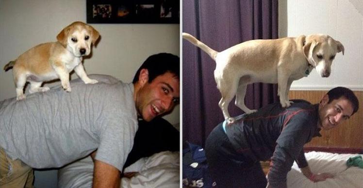 عکسهای جالب حیوانات در گذر زمان