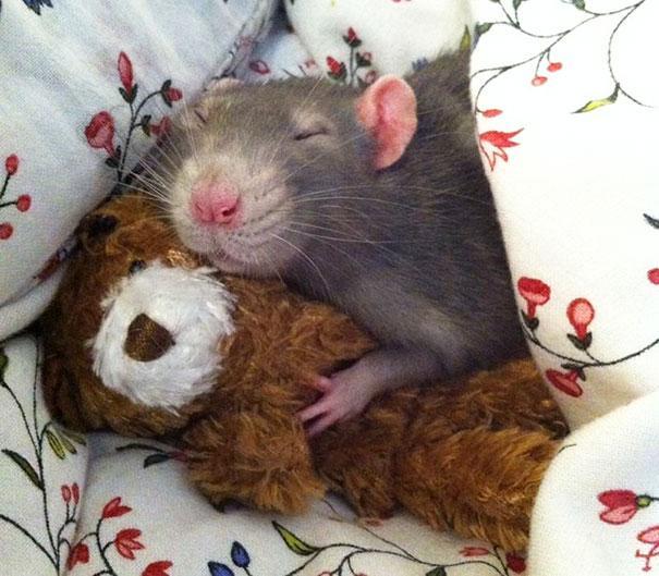 عکس موش ها ناز