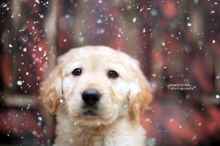 عکس های خیلی زیبا از سگ ها