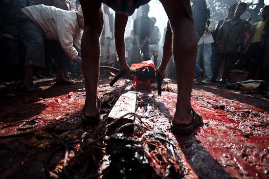 عکس های ترسناک ترین جشنواره جهان +18