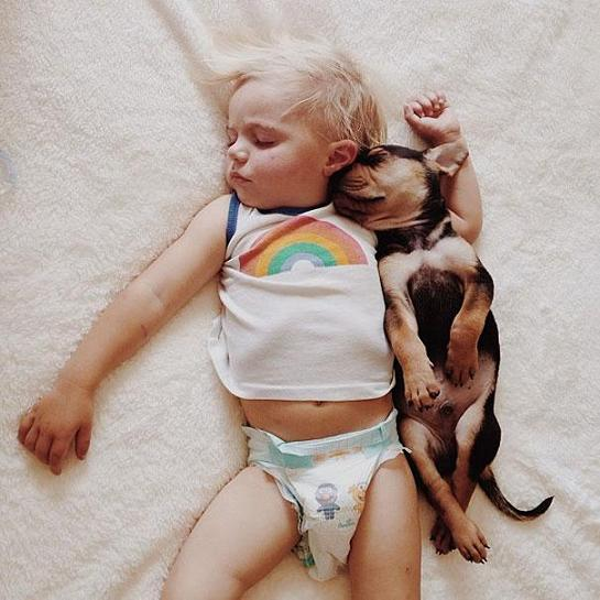 عکس خوابیدن سگ