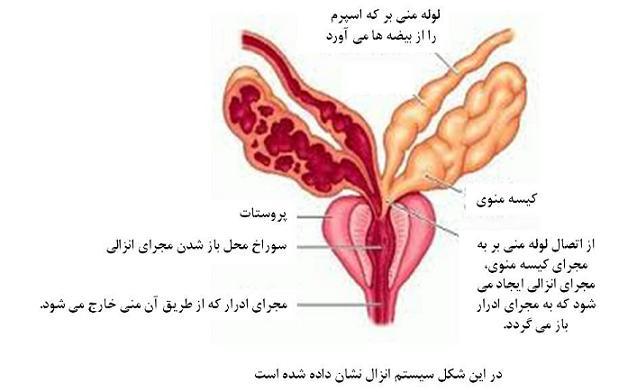 خطرات وجود خون در مایع منی