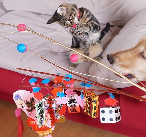 عکس های دوستی عاشقانه گربه و سگ